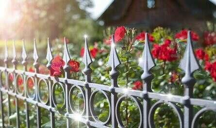 Gartenzaun mit Rosen