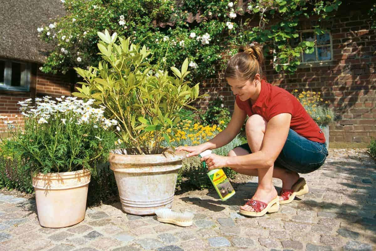Pflanzenpflege mit Dünger