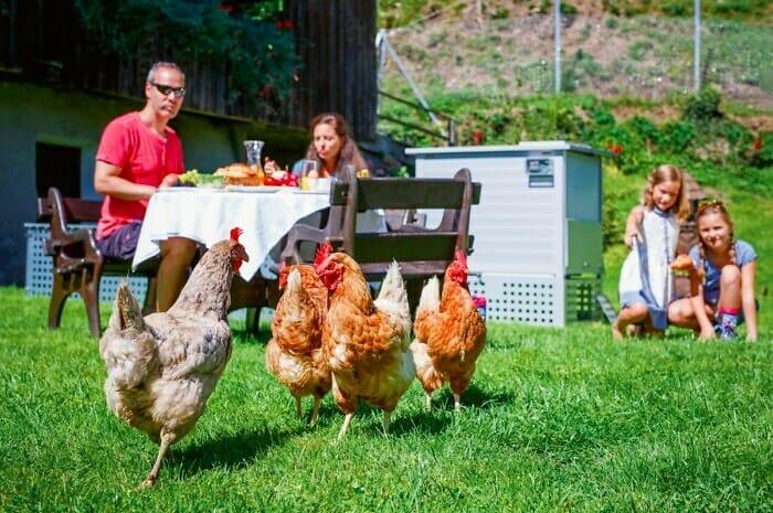 Kompakter Hühnerstall für eigene Bio-Eier