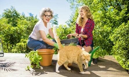 Frauen topfen Pflanzen um